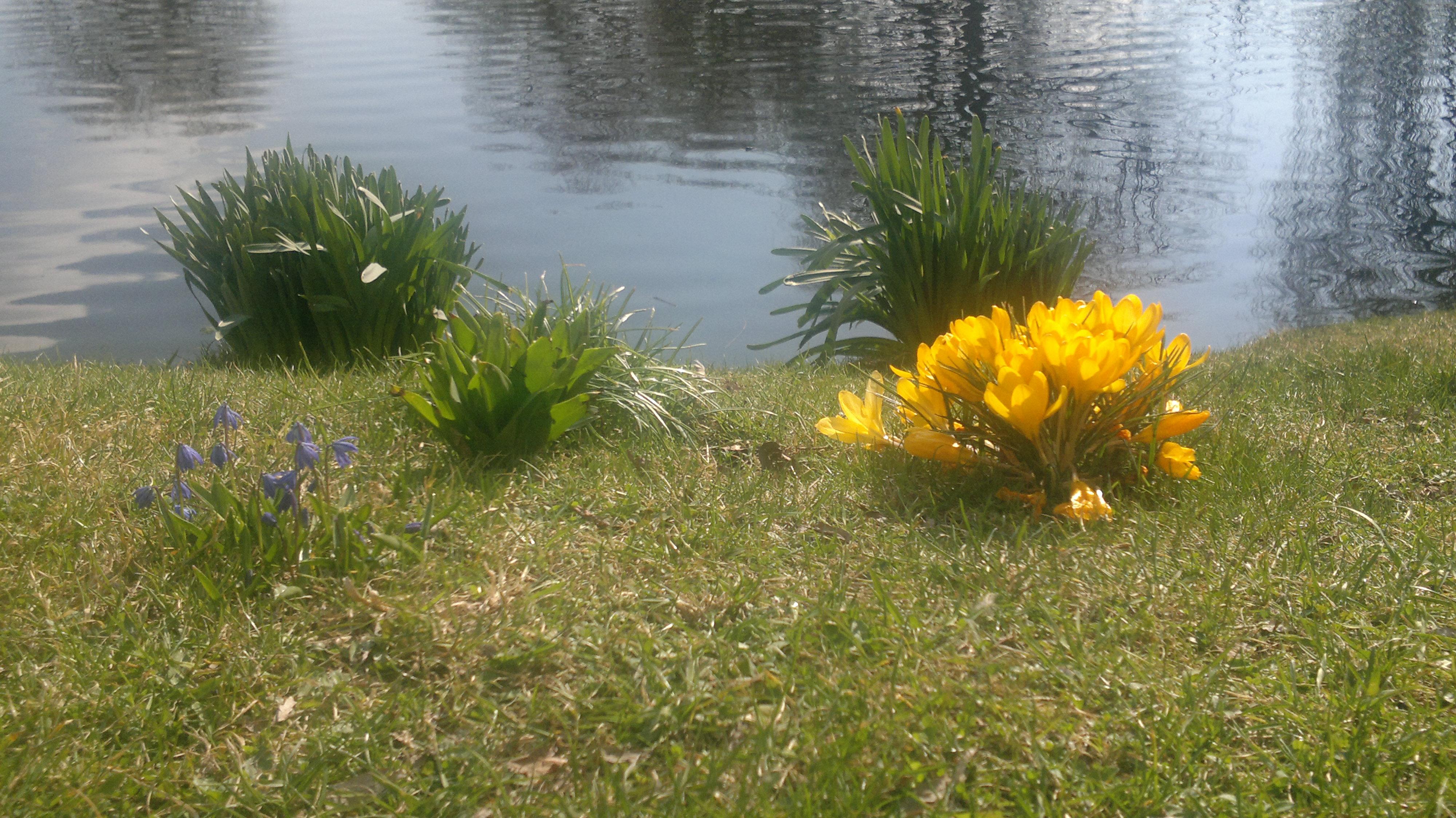 2011-03-27_Teich