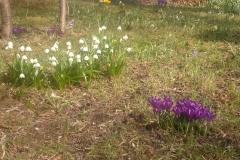2011-03-27_Frühling